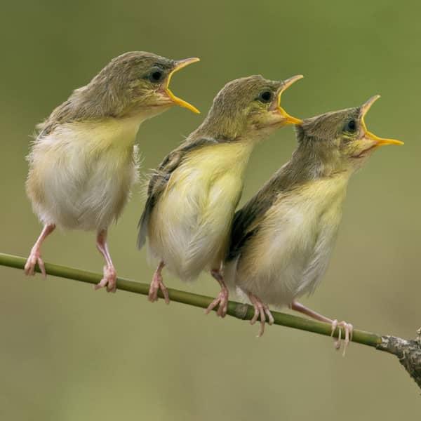 آواز پرندگان در فصل تابستان