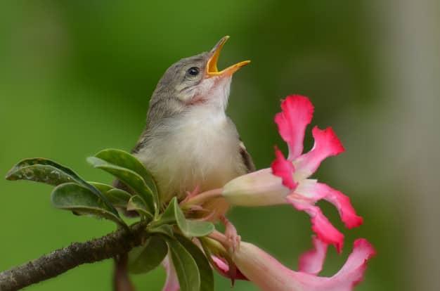 آیا همچنین متوجه شده اید که آواز پرندگان در فصل تابستان کمتر از فصل بهار است؟